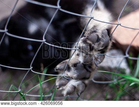 Dog Paw Pad In Macro Detail. Cute Playful Puppy At Animal Shelter. The Paw Is On The Fence. Close Up