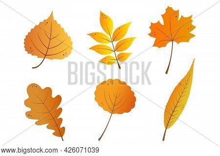 Autumn Leaves Set In Yellow, Orange And Red Gradient Colors. Cartoon Maple, Rowan, Oak, Willow, Aspe