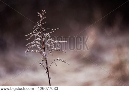 Escape Of Dry Meadow Grass In Early Spring In Creative Style