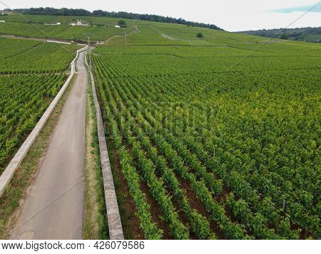 Aerian View On Walled Green Grand Cru And Premier Cru Vineyards With Rows Of Pinot Noir Grapes Plant