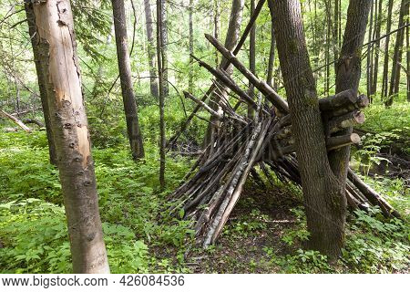 Survival Shelter In The Woods From Tree Branches. Cone Or Pyramid Shape Shelter.