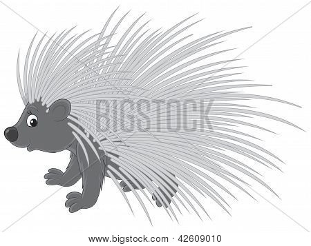 Porcupine, vector clip-art on a white background poster