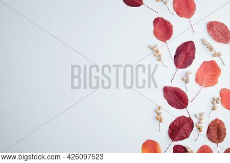 Autumn Floral Design Composition Of Fall Leaves