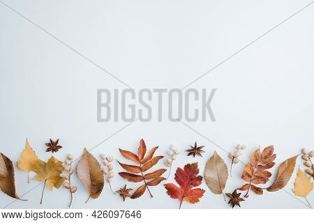 Autumn Background, Border Of Dried Leaves On White