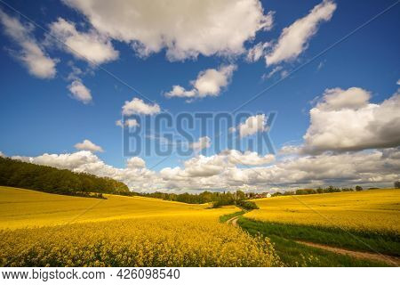 Panorama of agricultural rapeseed field with clouds. Canola is an oil crop for fuel production.