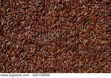 Raw Red Unpolished Rice As Background. Rubin Grains Closeup. Bhutanese. Uncooked Organic Brown Rice