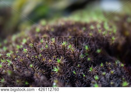 Close-up Of Fresh Green Moss In The Greenhouse On A Blurred Background With Selective Focus. The Pic