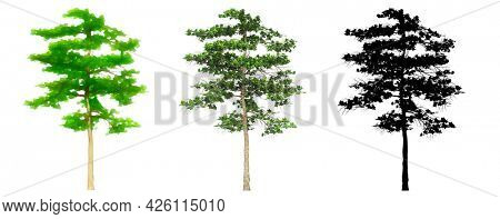 Set or collection of Almond trees, painted, natural and as a black silhouette on white background. Concept or conceptual 3d illustration for nature, ecology and conservation, strength, endurance