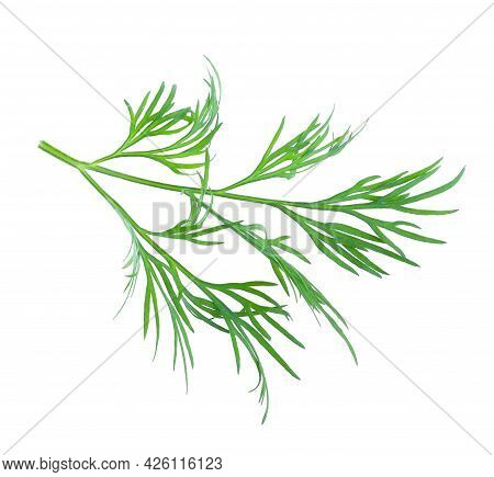 Sprig Of Fresh Dill On White Background, Top View