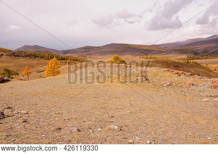 Hilly Steppe In Autumn Colors With Lonely Yellowed Larch Trees. Kuraiskaya Steppe, Altai, Siberia, R