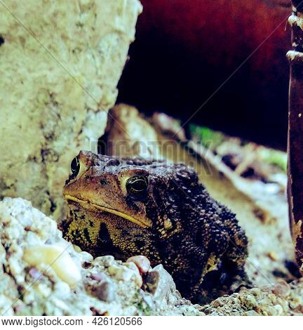 Photo Of A Toad Hiding In The Shade Of Some Rocks