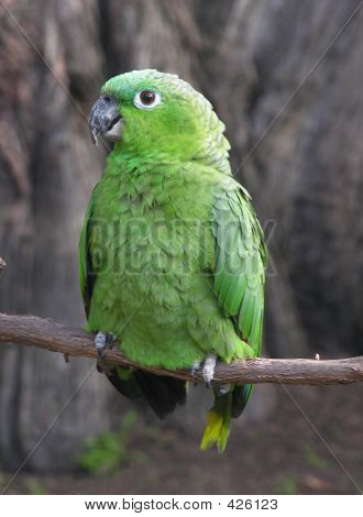 a photo of a green parrot poster