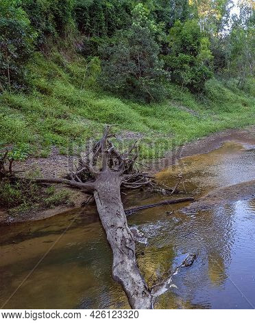 A Country Creek In Beautiful Early Morning Light. Sandy Creek, Mackay, Queensland, Australia.