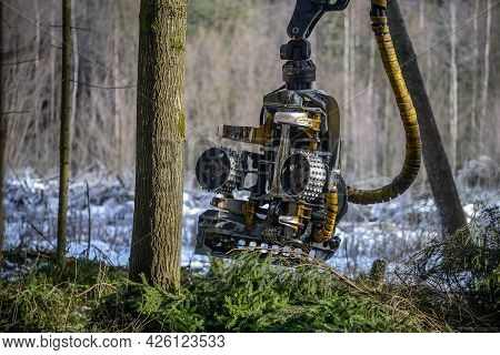 Belarus - 02.02.2021 - Harvester Working In A Forest. Harvest Of Timber. Firewood As A Renewable Ene