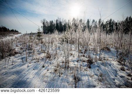 Belarus - 02.02.2015 - Winter Forest In A Sun, Meadow, Landscape