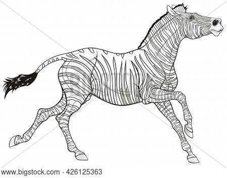 Linear Illustration Of A Zebra Galloping With Its Head Up. Running Striped Stallion Laid Its Ears Ba