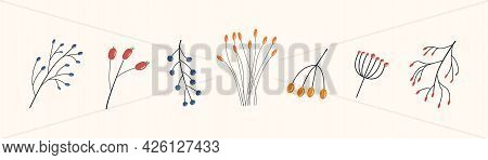 Set Of Different Branches With Red, Orange And Blue Berries. Wild Forest Plants. Collection Of Botan