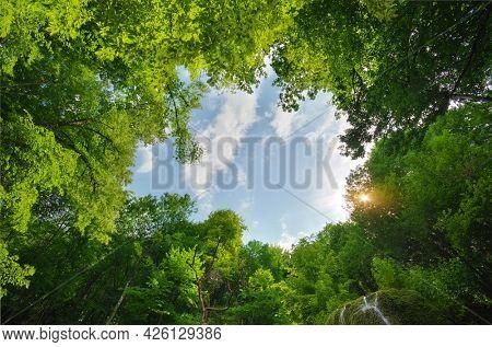 Green nature frame of spring wood. Nature landscape.