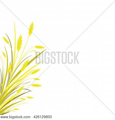Autumn Background With Bouquet Of Gold Ears Of Wheat, Barley Or Rye On The Left. Isolated On White.
