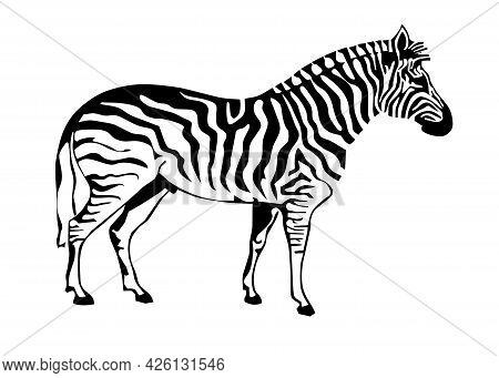 Zebra Silhouette Isolated On White Background. Vector Illustration