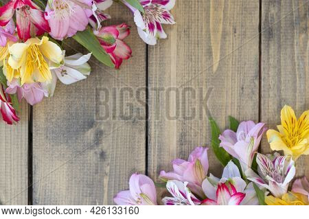 Background From Multi-colored Flowers With Copy Space. Multicolored Alstroemeria, Pink, Yellow, Mage