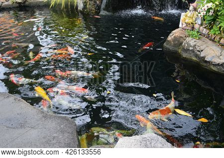Decorative Ponds With A Waterfall And Koi Carp (thailand).