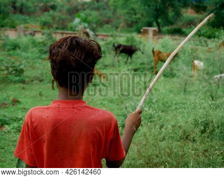 A Cowherd Boy Holding Stick Looking Mammals At Green Forest Filed.