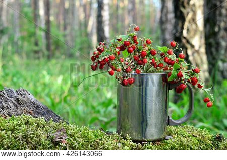 Wild Strawberry In The Forest. Bouquet Of Fresh Wild Strawberries On A Background Of Green Leaves An
