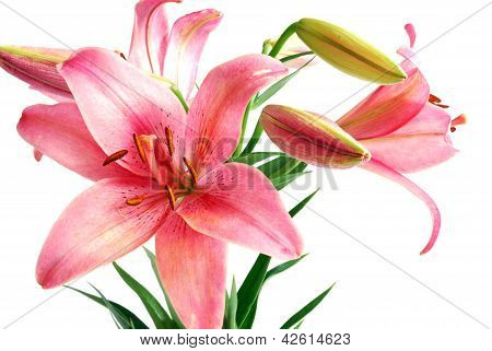 Lily Bouquet