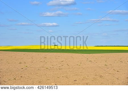 View Of A Green Field With Yellow Oilseed Rape In The Countryside Against A Blue Sky With Clouds. Ag