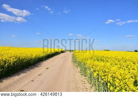 Countryside Road To A Farm At Yellow Oilseed Rape Field On Blue Sky Background