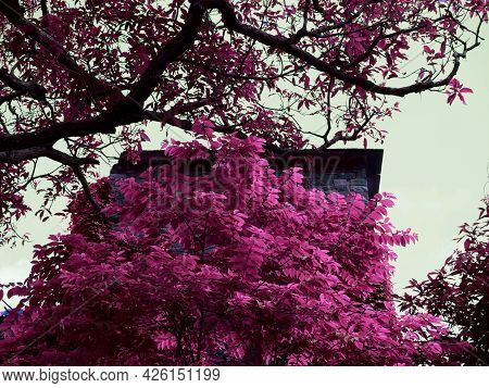 Stone Brick History House Side Corner View Behind Natural Pink Tree Leaves At Sky Background.