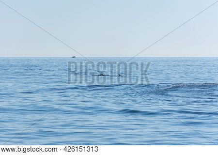 A Dolphin Jumps On The Surface Of The Blue Sea. Minimalistic Seascape About The Back Of A Dolphin On