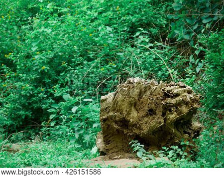 Wood Log Piece Presented On Green Natural Leaves Background.