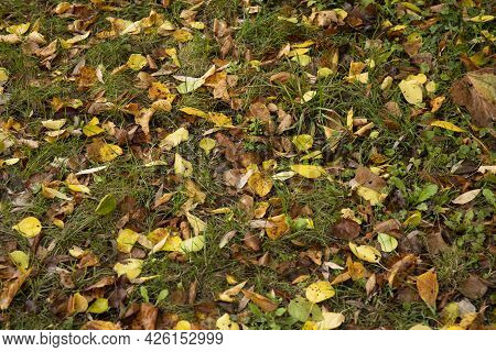Autumn Background Of Ground With Green Grass And Fallen Leaves