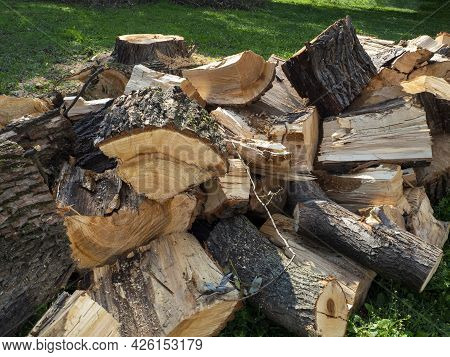 A Pile Of Sawn And Chopped Logs Lie On The Grass Next To The Stump. Logging, Firewood Preparation. N