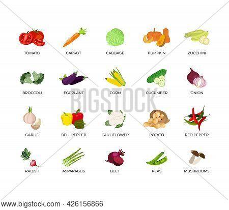 Vector Set Of Vegetables. Tomato, Carrot, Cucumber, Pumpkin, Zucchini, Broccoli, Eggplant, Corn, Cab