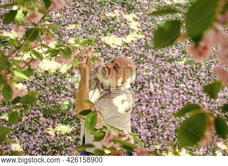 Happy Spring Day. Grandfather Smiling While Watching Pink Sakura Blossom. Man Under Cherry Blooming