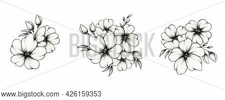 Hand Drawn Vintage Floral Compositions Isolated On White, Botanic Floral Art Illustration With Black