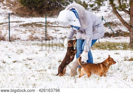 Young Woman Having Fun During Winter. Female Playing With Her Two Small Purebreed Dogs Puppies While