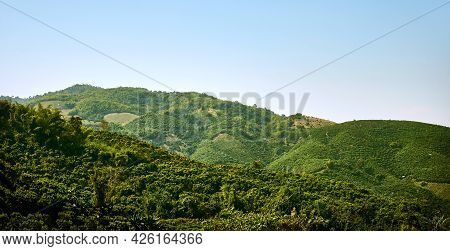 Tea plantations on the slopes of the mountains at Doi Mae Salong. Chiang Rai Province. Thailand. Tha