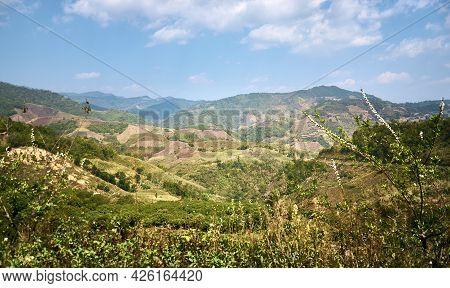 Mountainside plantations at Doi Mae Salong. Mountain landscapes of northern Thailand. Chiang Rai Pro
