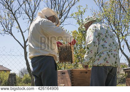 Beekeeper Is Working With Bees And Beehives On The Apiary. To Restack A Hive, To Sample A Colony Of