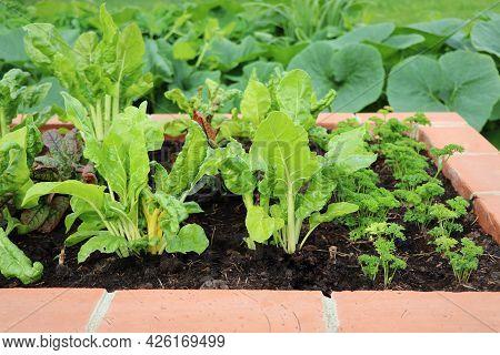 A Modern Vegetable Garden With Raised Briks Beds . Raised Beds Gardening In An Urban Garden . Red, Y