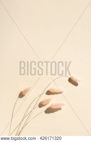 Spikelets On A Beige Background. Minimalistic Art Still Life Copy Space
