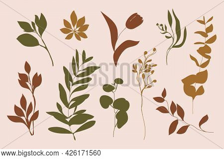 Vector Set Of Leaves And Branches. Silhouette Leaf, Plants, Tulips, Olive Branch. Illustration For P
