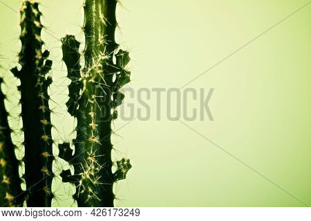 Little cactus plant against green wall.