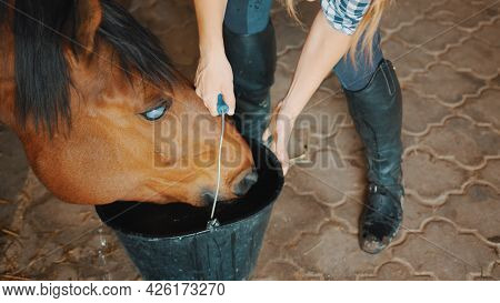 Female Horse Owner Helping A Blind Horse Drinking Water From The Bucket. A Dark Brown Blind Horse Dr
