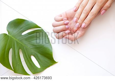 Manicure Hands On White Near Monstera Plant. Female Hands Manicure, Cosmetic Cream, Monstera Leaf On