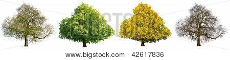 four season isolated tree set